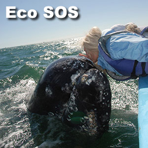 Eco SOS Sign Up Now